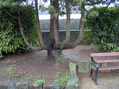 1sixbranchestree