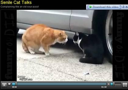 beritamaya-kucing-marah2