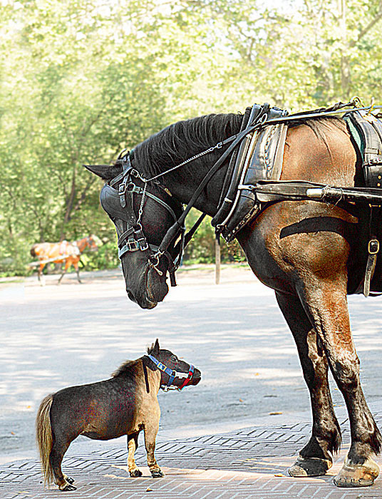 thumbelina_smallest_horse