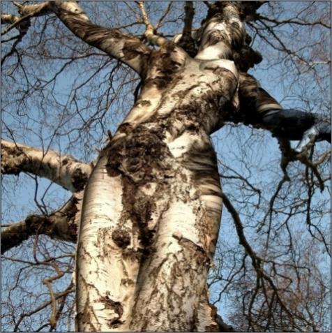 weird-tree1