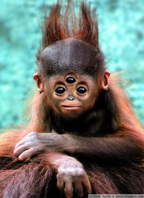 freaky_monkey