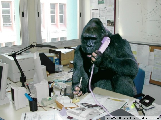 gorilla_at_work