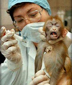 carolinelucasmep.org.uk_animal-testing