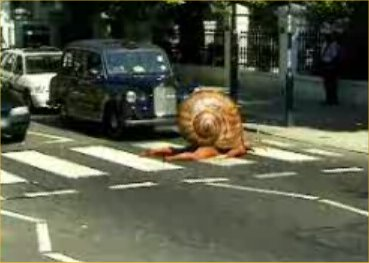 man-snail-on-abbey-road
