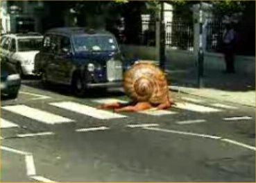 man-snail-on-abbey-road