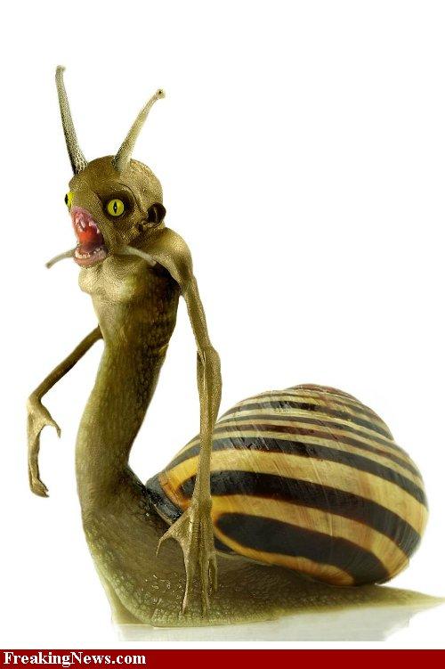 Monster-Snail--34969