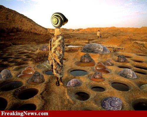 Snail-farm--50618