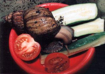 SnailFood