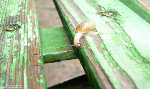 sustainable-gardening-tips.com___snail-photo