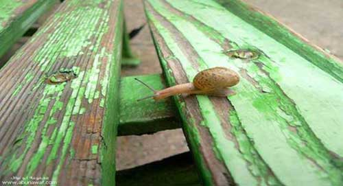 sustainable-gardening-tips.com__garden-snail